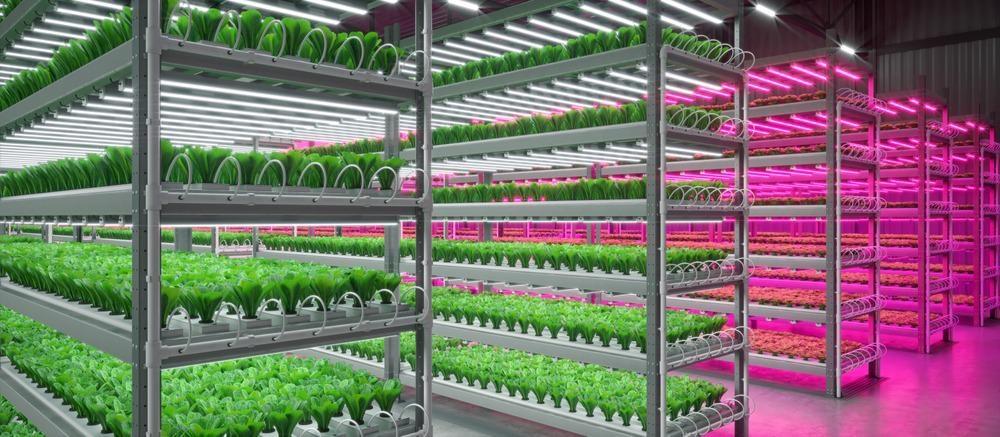 indoor farming, sustainable farming