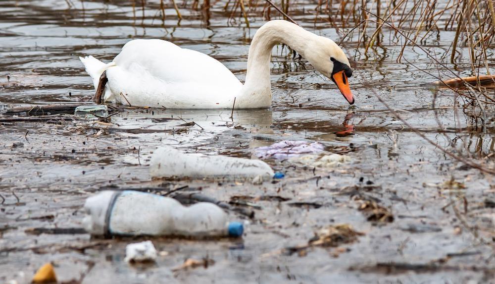 plastic, rivers, pollution, oceans