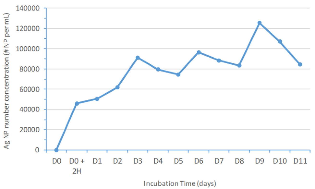 Ag NP number concentration variation with incubation time. On a daily basis, approximately 42000 Ag BPEI NP per mL with a diameter of 60 nm were added from day zero (D0) until day 10 (D10).