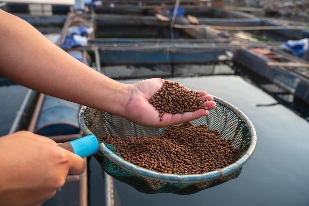 fish feed aquaculture farm