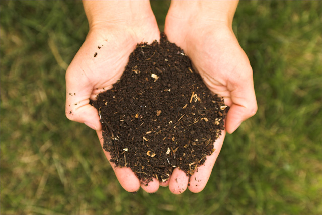 Common compost, ready to use.