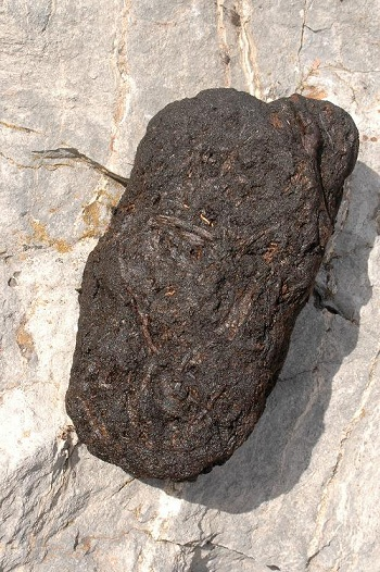 Natural, concentrated peat, the precursor of coal.