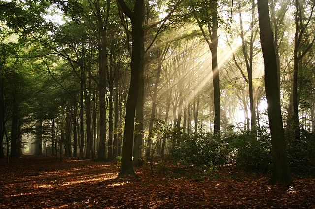 Many people are now choosing a natural burial in a serene piece of countryside or forest, where the grave is more likely to be marked with a tree than a headstone.