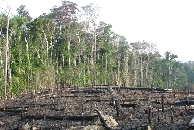 20 January 2010: A destroyed section of the tropical rainforest, Amazonia, Brazil Image credit: guentermanaus / Shutterstock.com