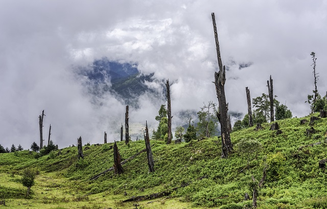 Tree stumps are left here due to disease and illegal logging (deforestation) high in the mountains of western Arunachal Pradesh, north east India