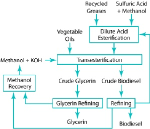 Schematic of biodiesel production path.