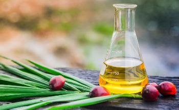 C16 Biosciences's Sustainable Alternatives to Palm Oil