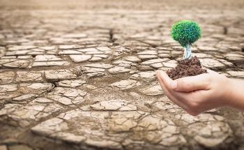 Desert Control: Tackling Desertification with Clay and Water
