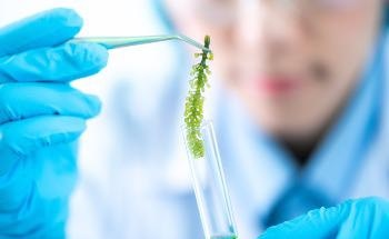 Turning Hydrogen Production Green with Microalgae