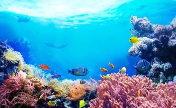 Are Restoration Projects Enough to Save our Coral Reefs?