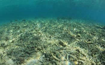 How Ocean Warming and Acidification are Impacting Coral Reef Growth