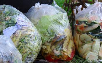 Genecis: Converting Food Waste into Biodegradable Plastics