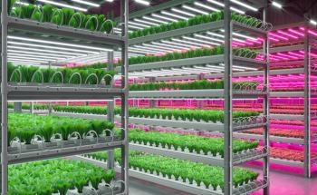 Converting Urban Areas into Indoor Pesticide-Free Farms for Year-Round Food