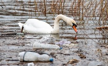 Tackling Plastic Pollution in Waterways with the 'Seacycler'