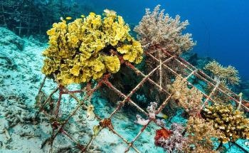 Natural Reefs vs Artificial Reefs: The Future of Ocean Environments