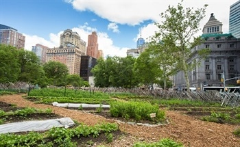 Relocating the Growing of Food to Urban Areas