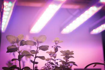 Commercial-Grade LED Grow Light for Vertical Farming - perihelion™