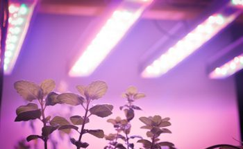 Commercial-Grade LED Grow Light for Vertical Farming - perihelion™