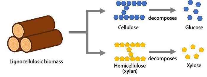 Structural components of Lignocellulosic biomass (which does not compete with global food supplies)