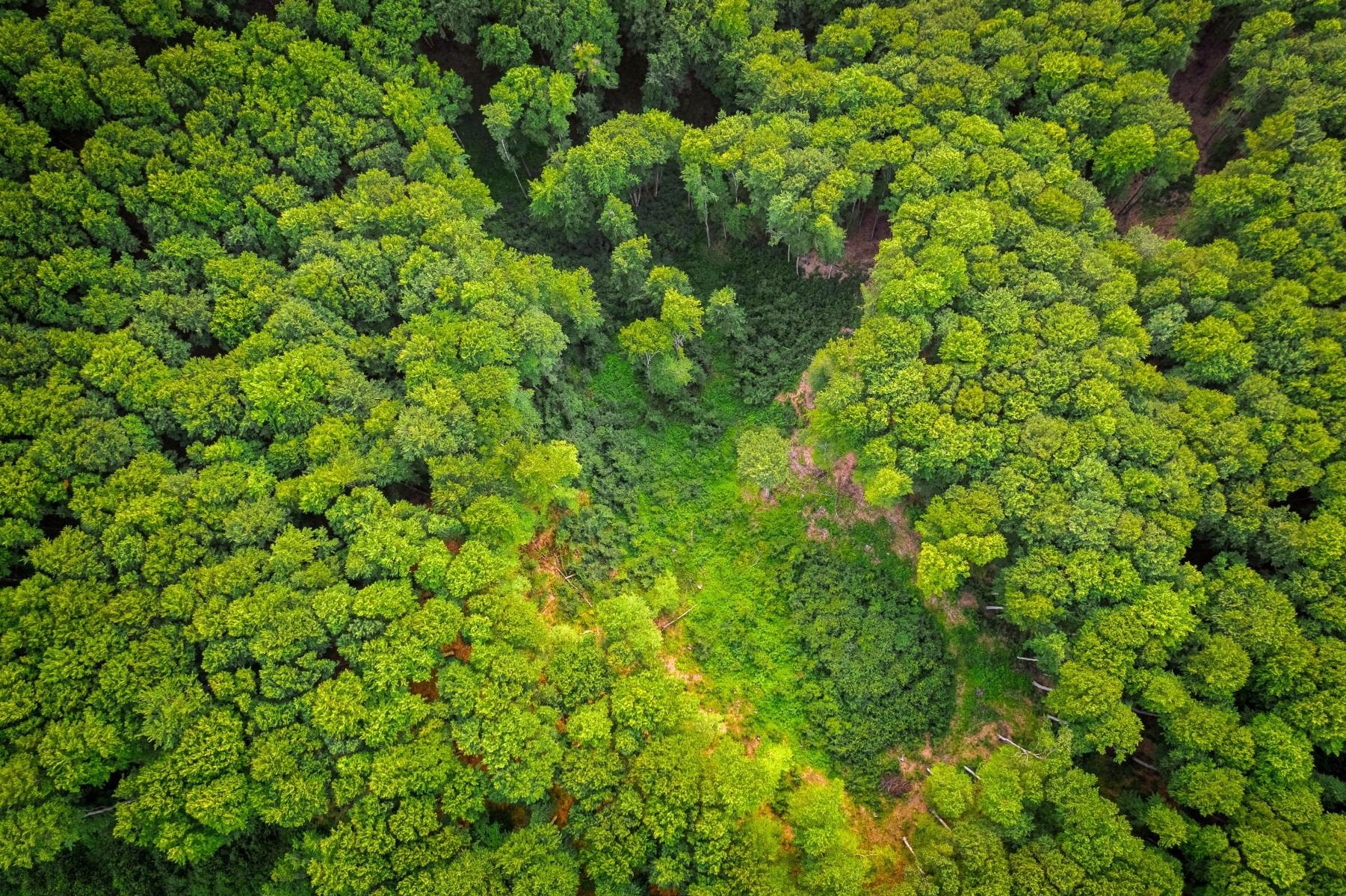 Planting and Protecting Trees can Help Mitigate Climate Change