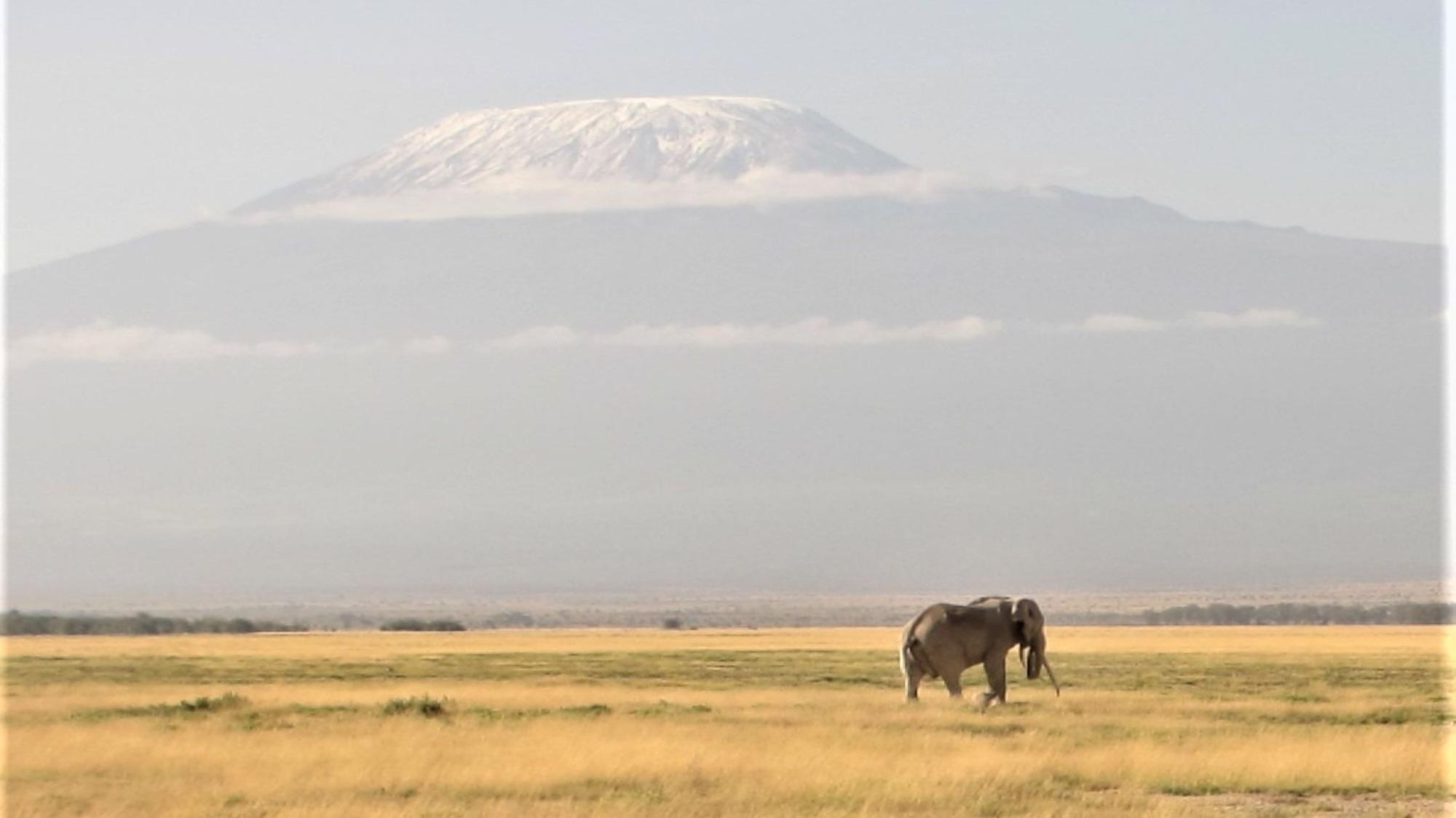 Amboseli National Park, Kenya: Due to climate change, glaciers on the Kilimanjaro are retreating. Plants and animals in the valleys below, however, are dependent on water from the glacier.