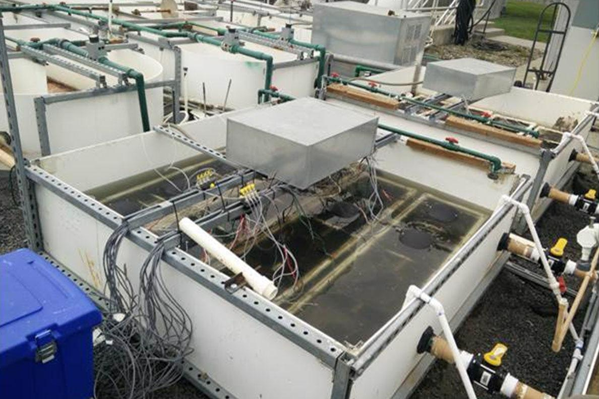 A switchable bioelectrochemical wastewater treatment system was tested at the pilot scale at a wastewater treatment facility in Moscow, Idaho.