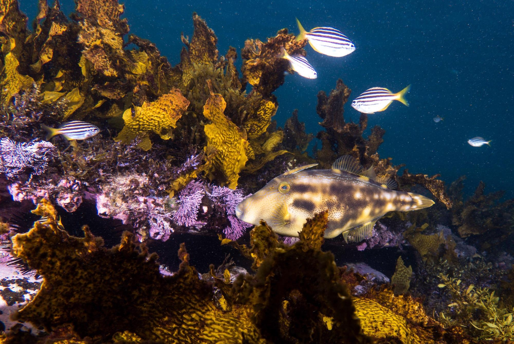 Are Partially Protected Areas the 'red herrings' of Marine Conservation?