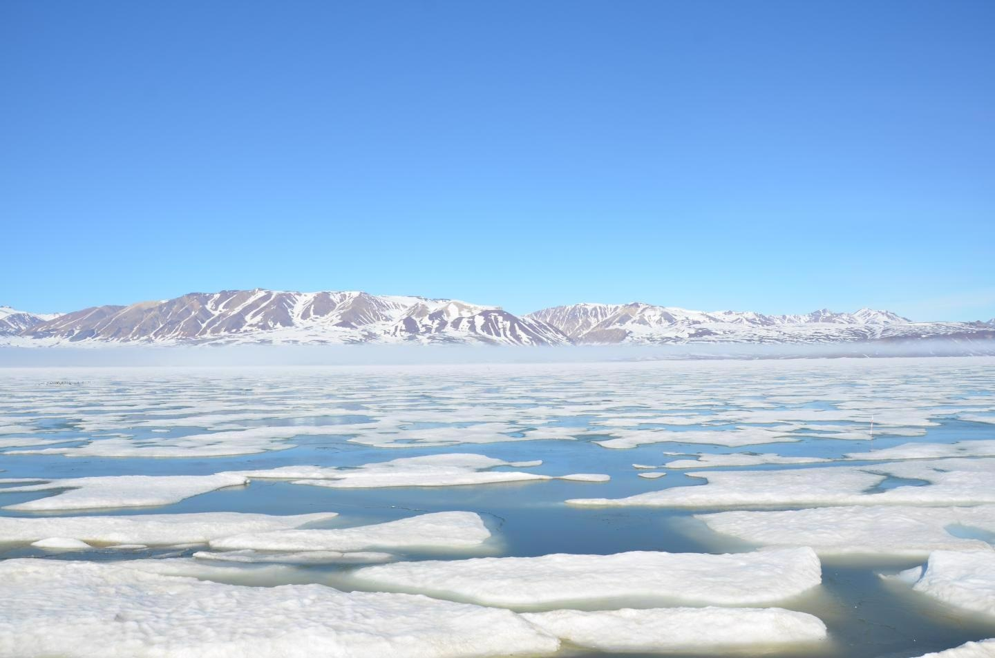 Future Ice Thinning in the Arctic Could Mean More Toxic Plankton Algae