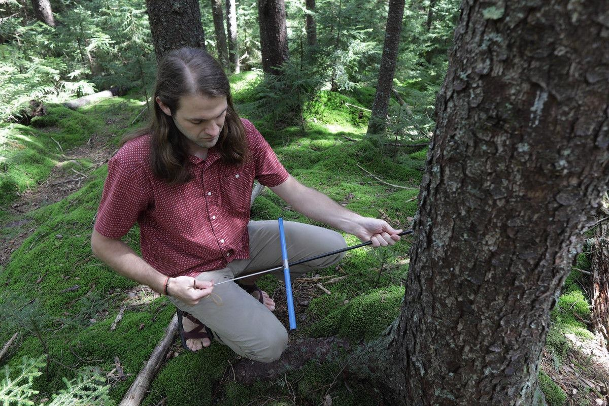 WVU alumnus Justin Mathias holds a tree increment borer to extract tree cores at Gaudineer Knob in West Virginia. Mathias and Richard Thomas, professor of forest ecology and climate change, found that trees are taking in more carbon dioxide than previously thought in a new study.