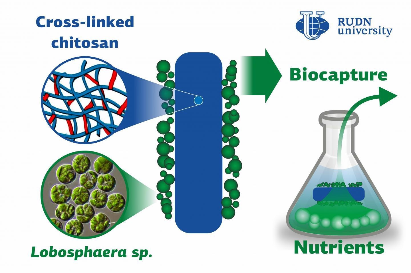Novel Technology for Biocapture of Phosphates and Nitrates from Wastewater