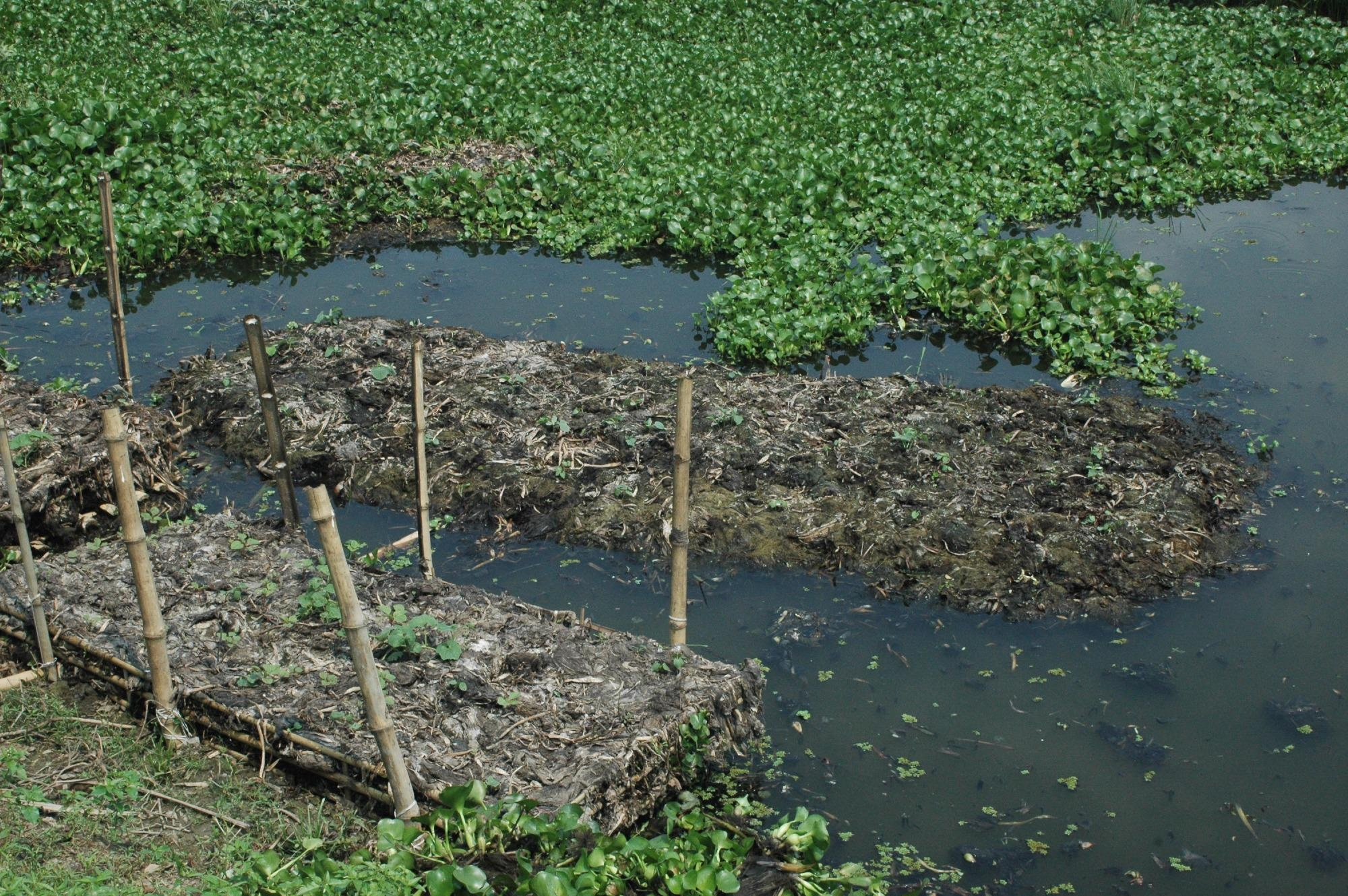 The floating gardens of Bangladesh could offer a roadmap for sustainable agriculture as the climate changes, a new study shows.