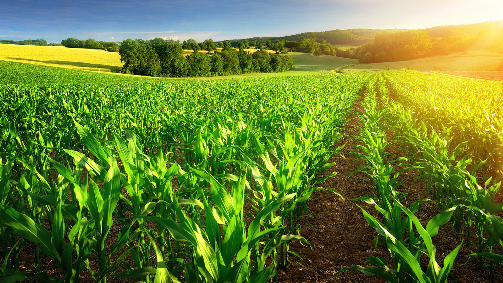 Study Reveals Corn Ethanol Use Reduces Carbon Footprint, Diminishes Greenhouse Gases