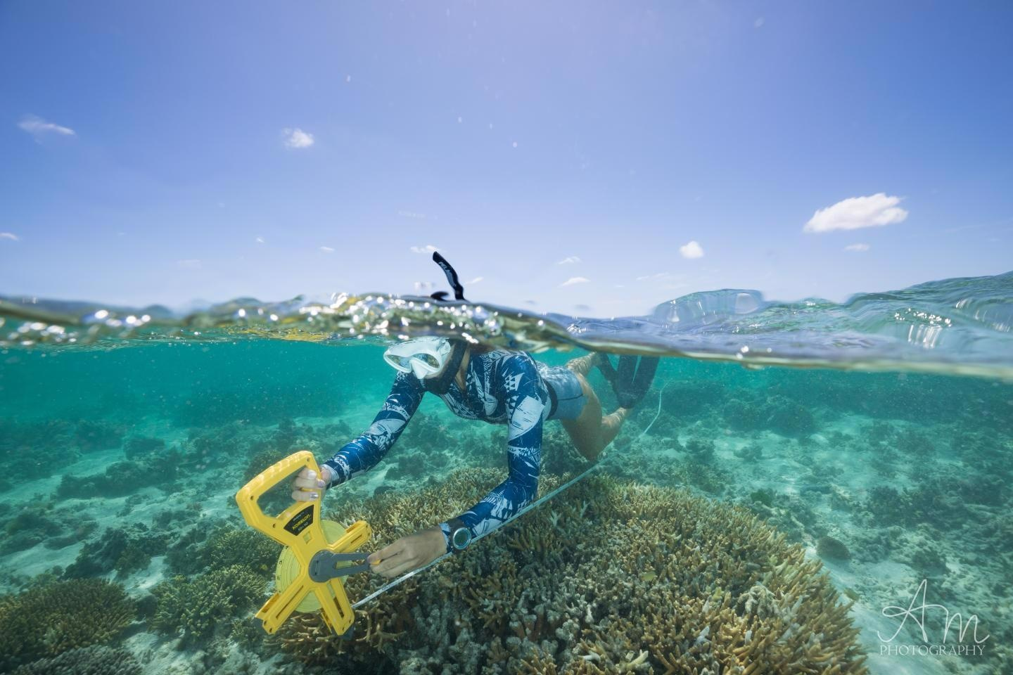 Declining Coral Health may Contribute to Reduce Global Calcification Rates.