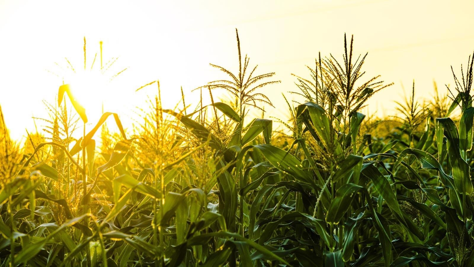 Innovation in Technologies and Agriculture Practices can Control Greenhouse Gas Emissions.
