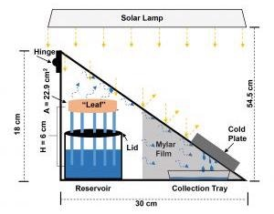 Researchers Develop a Synthetic Tree to Enhance Solar Steam Generation