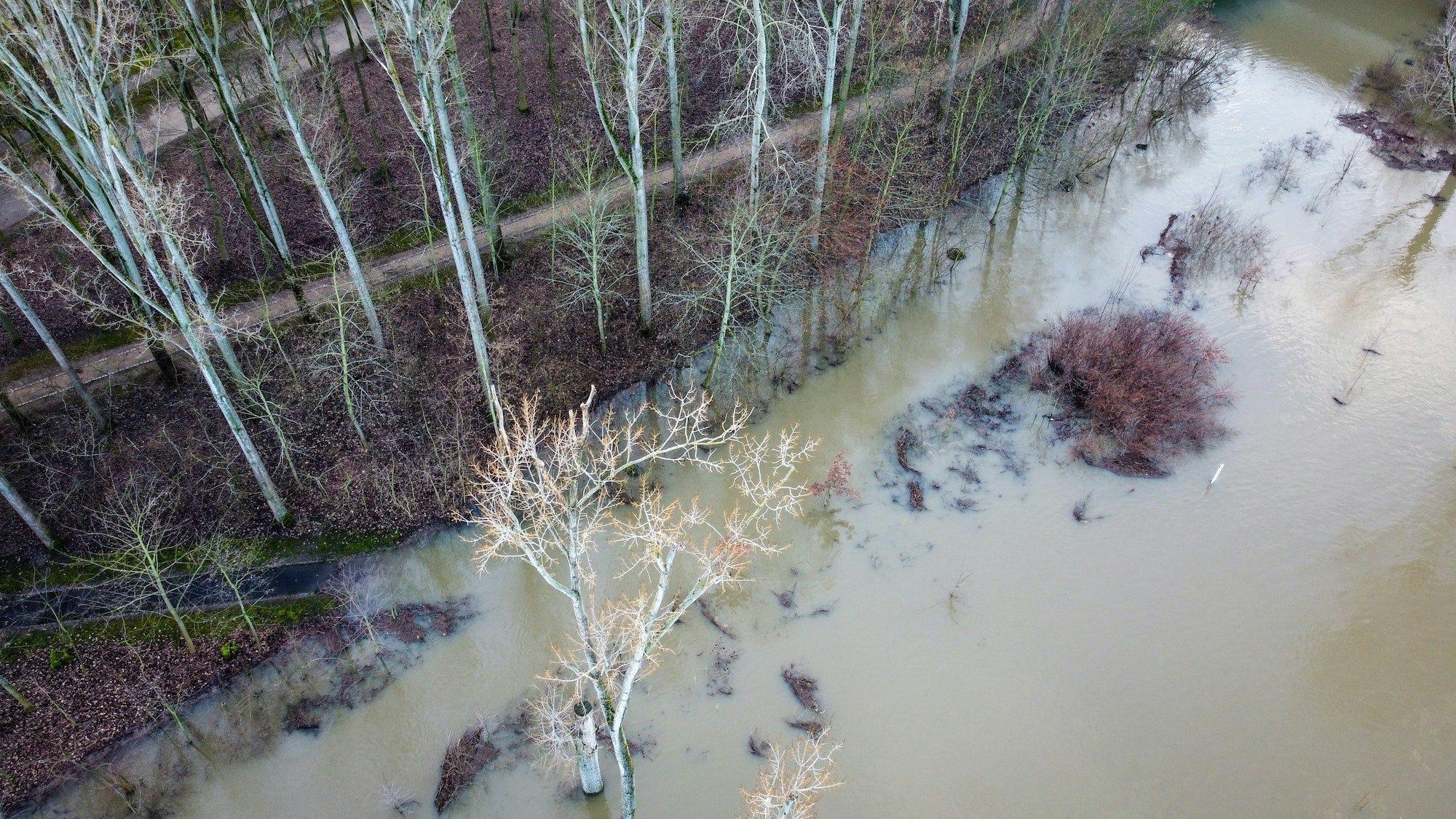Plant Responses to Floods are Crucial in Modeling Soil Carbon Storage