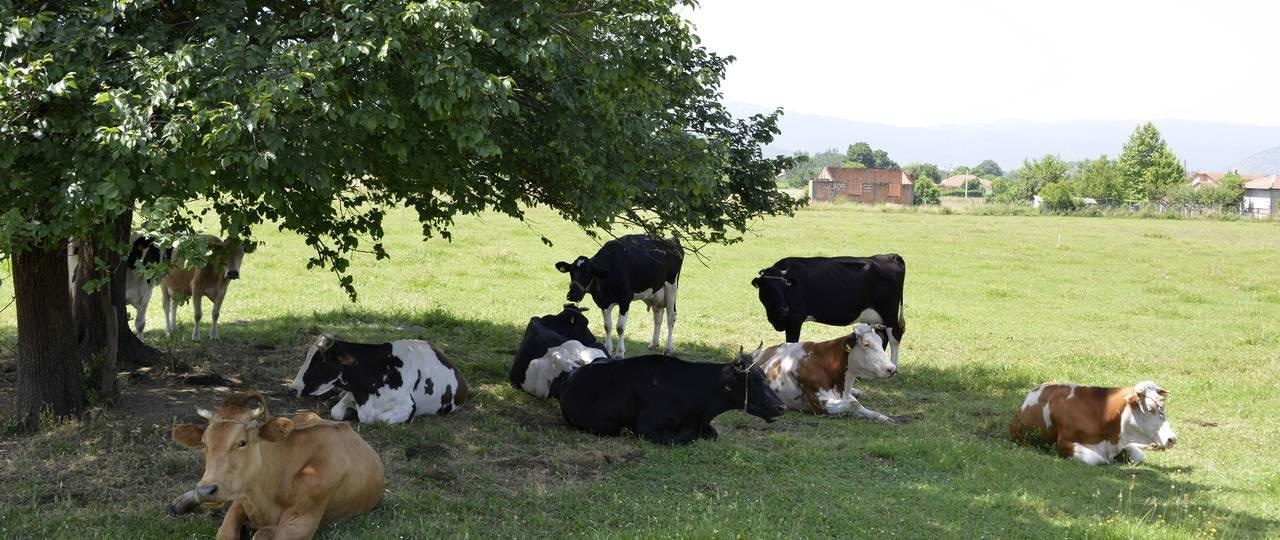 Climate Change Causes Higher Heat Strain for Humans, Animals and Crops.