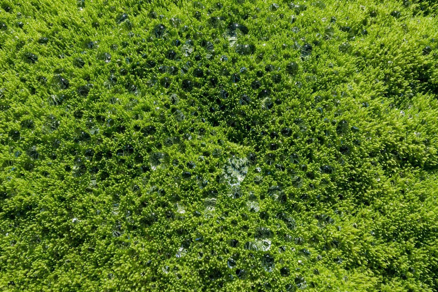 Emergence of Plant Colonies Altered the Climate Regulation Pattern of Earth