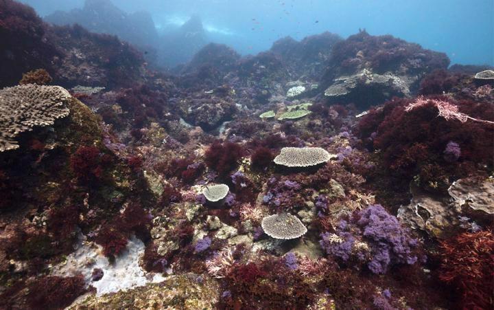 Ocean Warming, Acidification Shift Temperate Coastal Reefs into Simpler Ecosystems