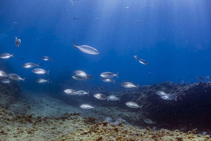 Fish Population