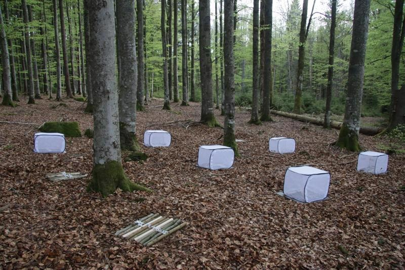 Study Quantifies the Significance of Insects in the Decomposition of Wood.