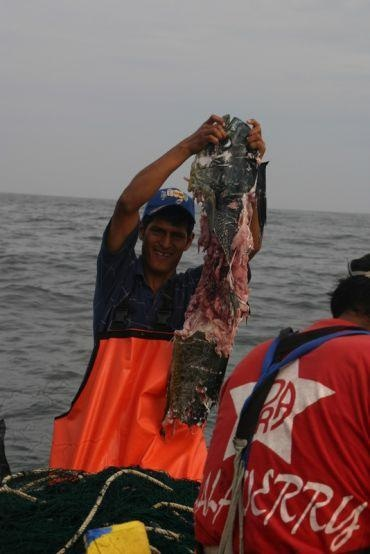 Researchers Work on Methods to Stop Global Marine Life Conflict