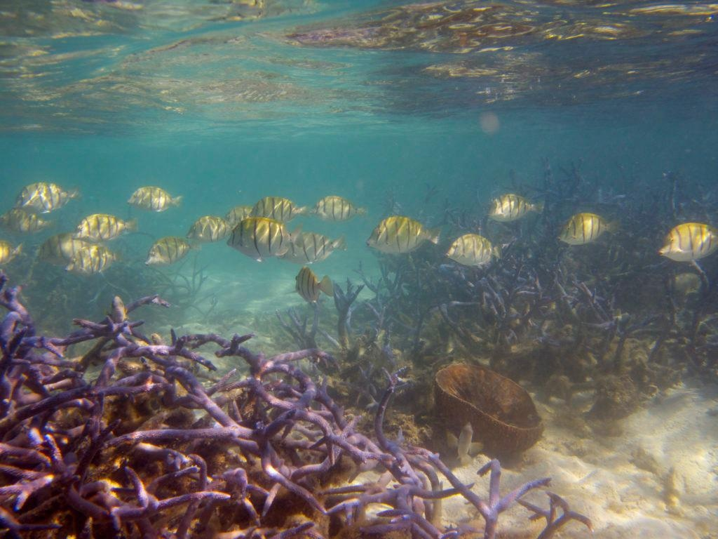 Coastal Communities at Risk as Coral Reefs' Ability to Provide Ecosystem Services Steadily Declines.