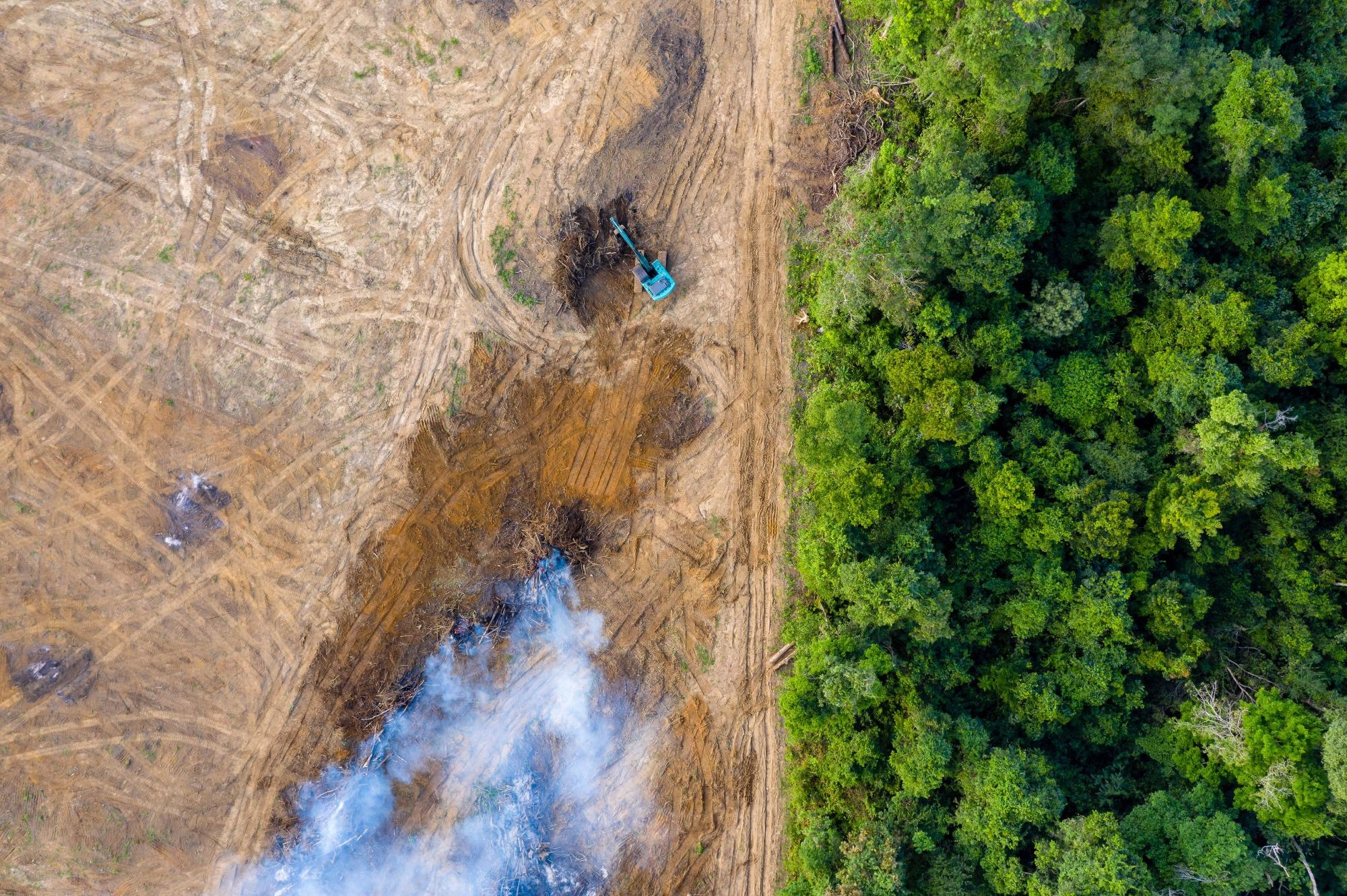 Brazilian Amazon Exposed to Lethal Heat Stress Due to Deforestation, Climate Change.