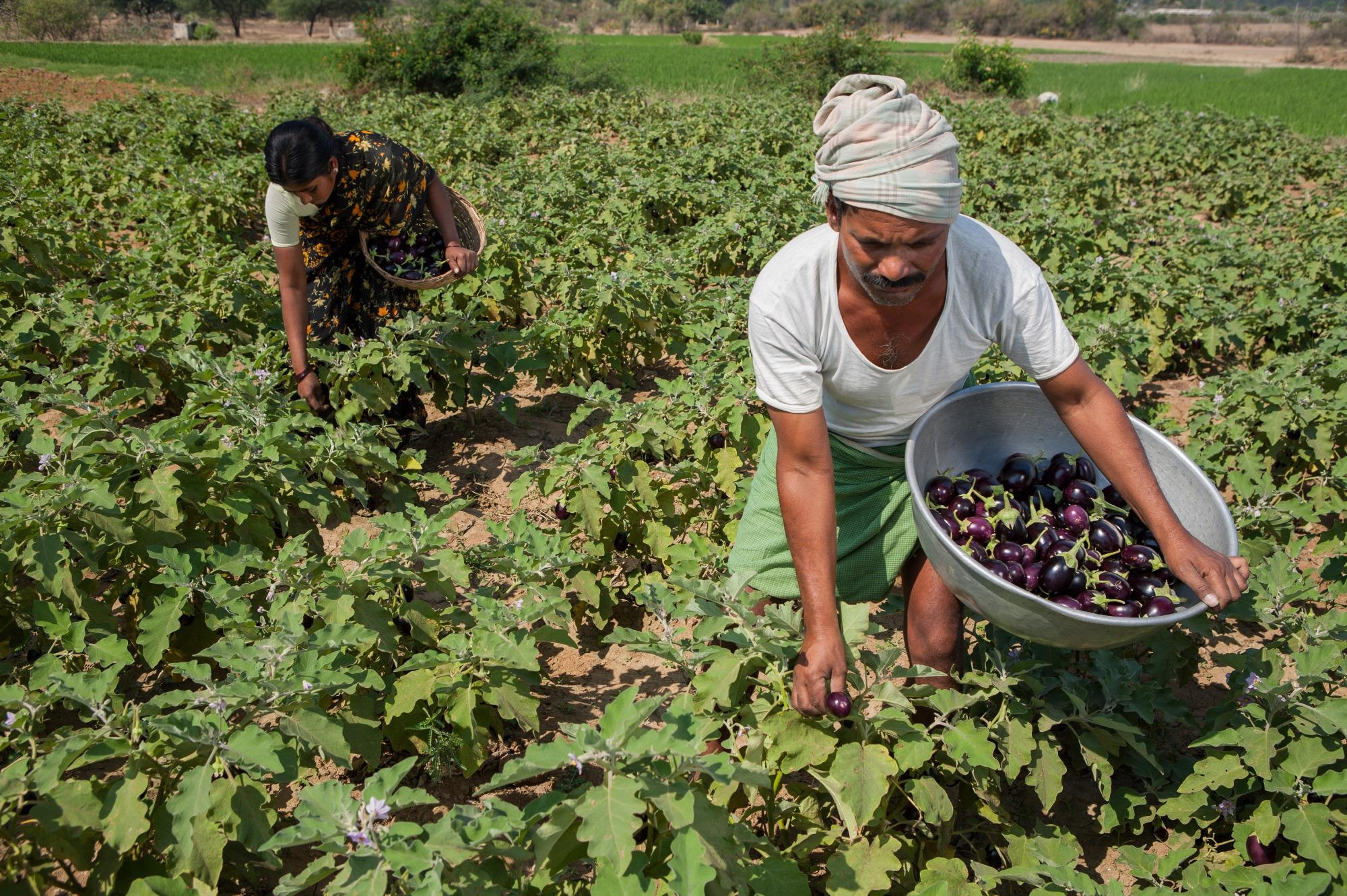 New Technologies to Emerge to Ensure Food Security in Sub-Saharan Africa, South Asia