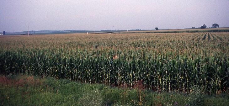 Climate Change: A Major Cause Affecting Rain in the U.S. Corn Belt
