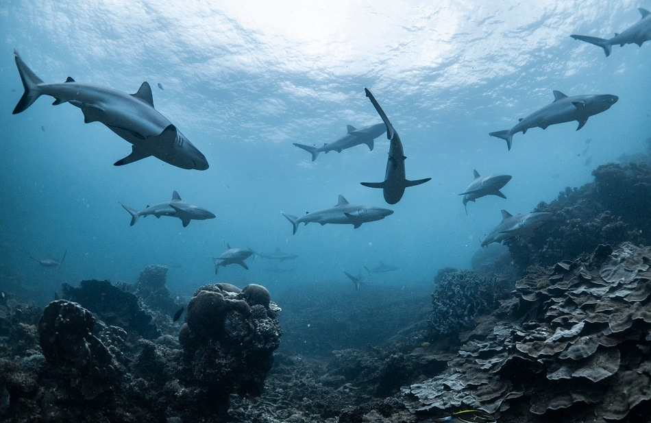 As Oceans Become More Acidic They are Corroding The Skin and Teeth of Sharks