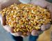 Biofuel Production to be Boosted by U.S. Government