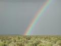 Richer Plant Diversity Significantly Enhances an Ecosystem's Productivity
