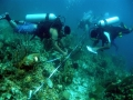 Storms Threaten Survival of Coral Reef